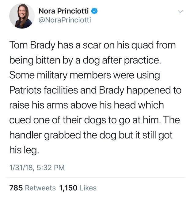 Tom Brady dog